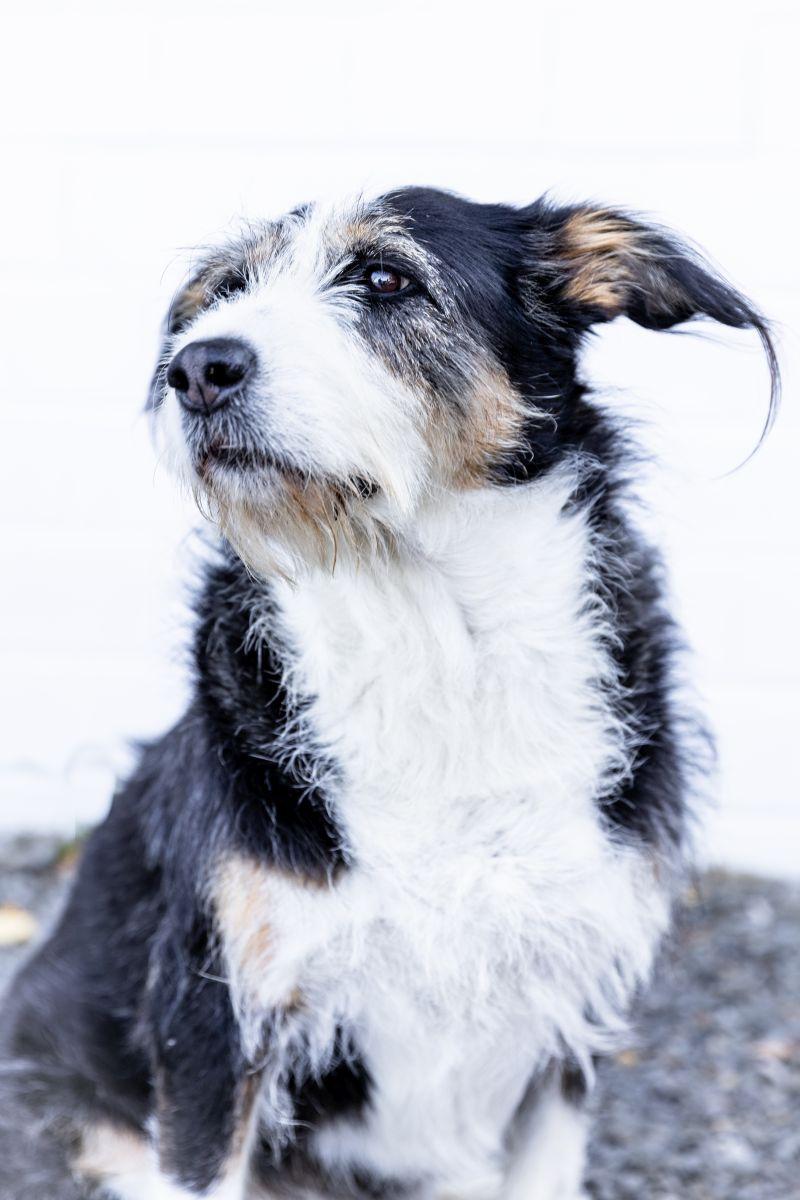 Elektro Wermelskirchen Hund